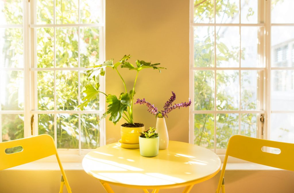 The Best Indoor Plants That Will Make Your Life Healthier!!!!