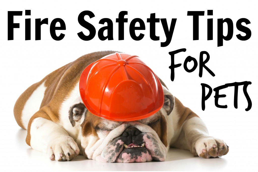 Tips On Fire Safety for Pets