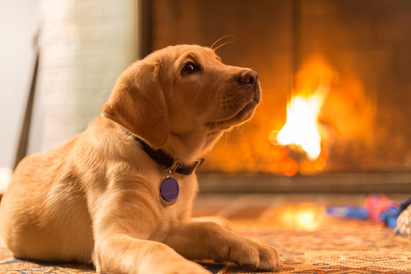 Prevention of Fires with & Pets Things to Have in Place