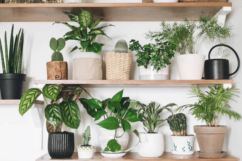 Seven whole plants for your home to make your home natural!